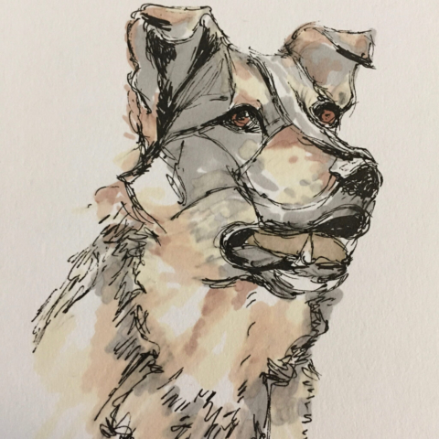 Picture shows an ink drawing of the head of a romanian rescue dog